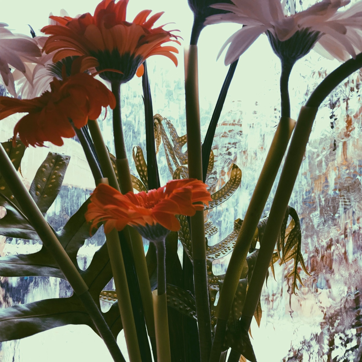 This Wilted Garden